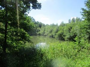 Terrain d'environ 4500 m² avec étang d'environ 1500 m²+…
